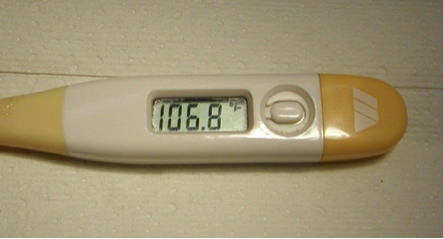104 fever in adult